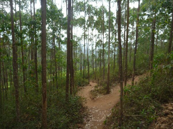 Forest Two Paths Diverging photo