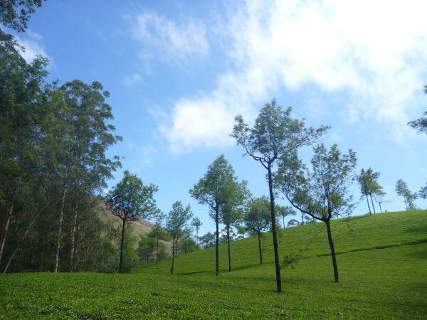 Beautiful Landscape Green Trees photo