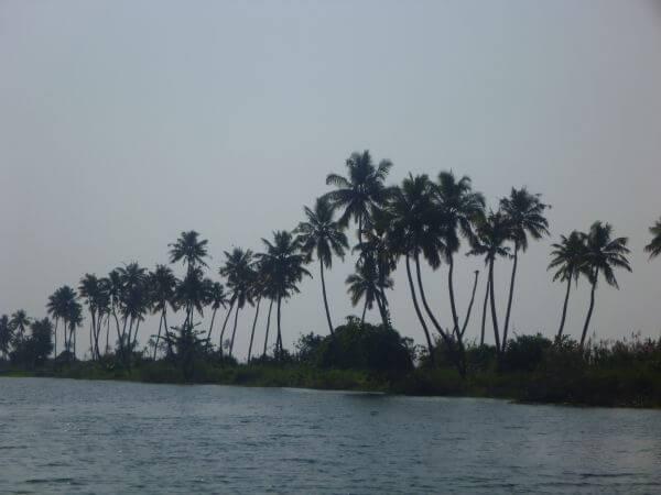 Kerala Waters Palm Trees photo