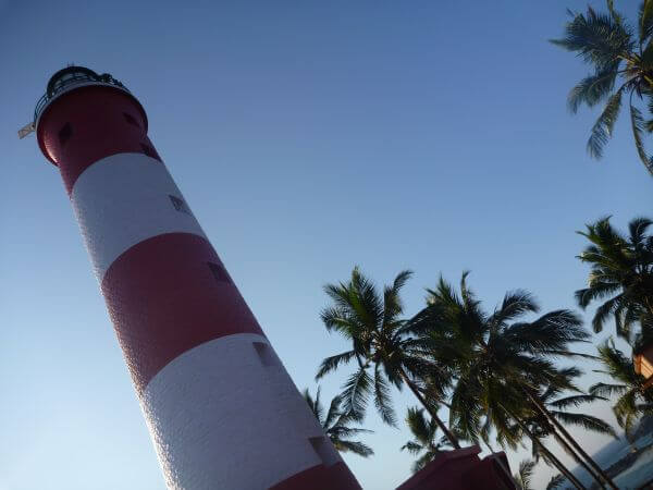 Lighthouse Palm Trees photo