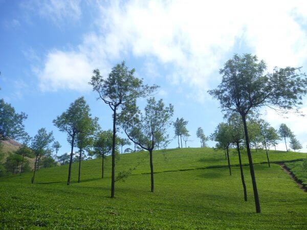 Lovely Scene Green Grass Blue Sky photo