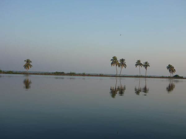 Reflection Of Coconut Trees photo