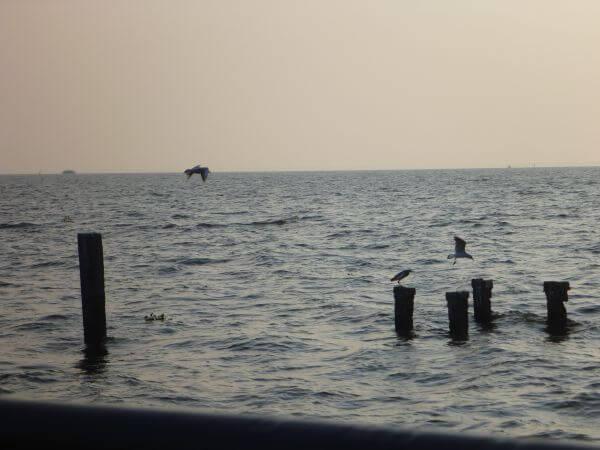 Stumps In The Sea photo