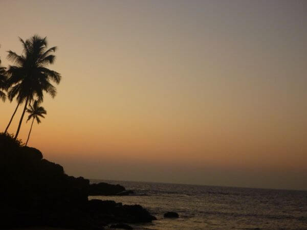 Sunset Palms Sea photo