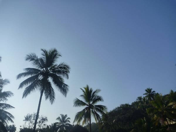 Tropical Island Coconut Trees photo