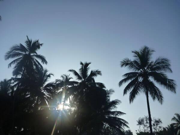Tropics Coconut Trees Palm photo