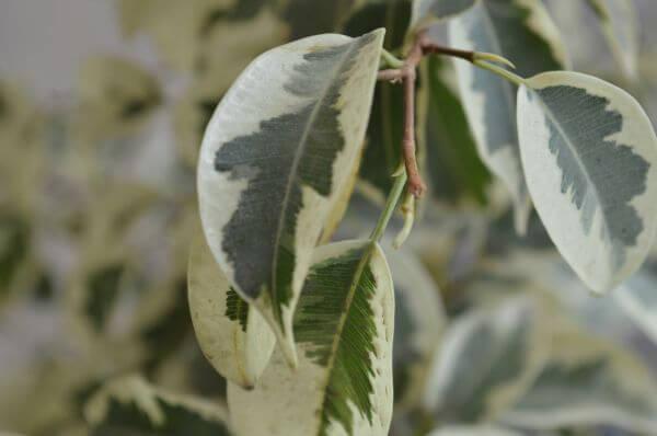 Leaf Closeup Potted Plant photo