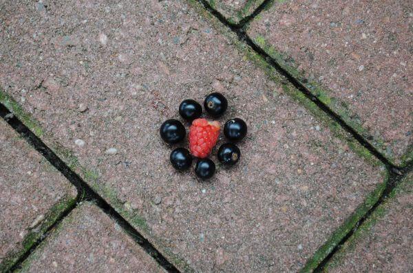 Raspberry and blackberries photo