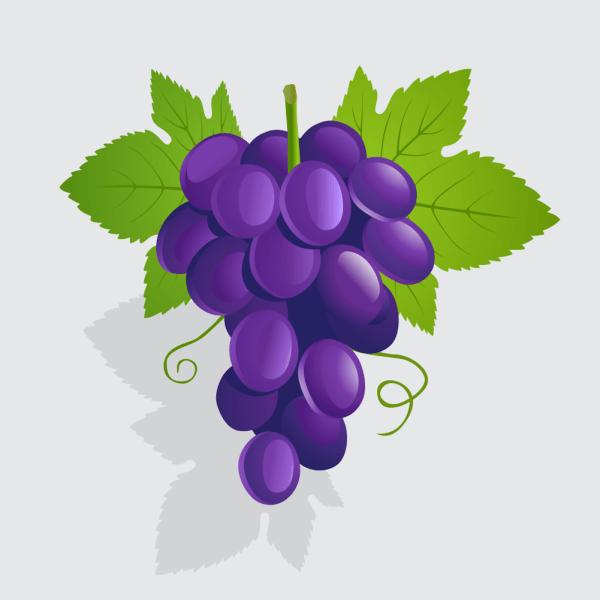 Vector illustration Grapes vector