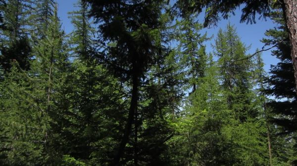 Okanagan  landscape  wilderness video