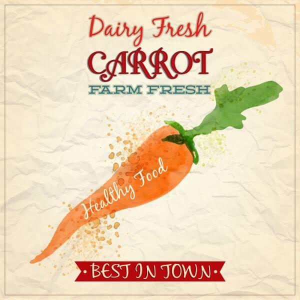 Vintage watercolor carrot with typography vector