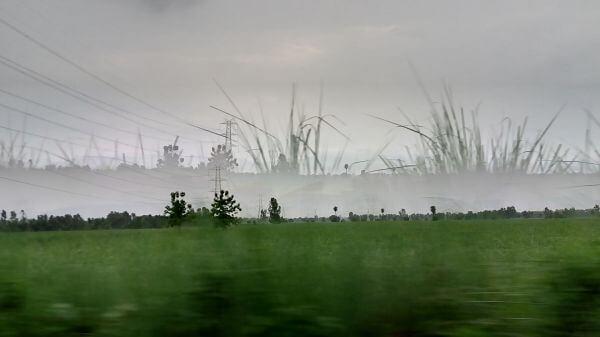 Grassland photo