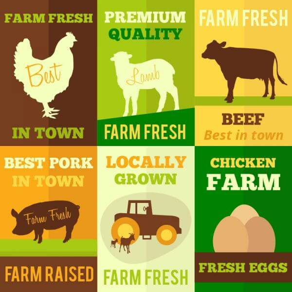 Farm products flat design concept cards vector