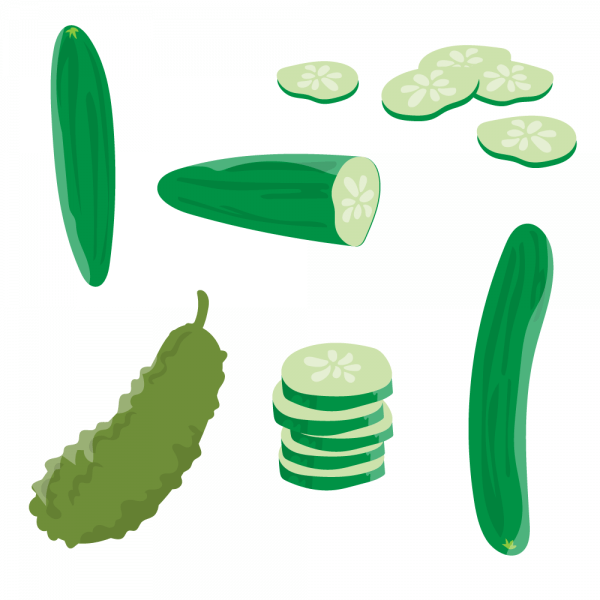 Fresh Cucumber Vector vector