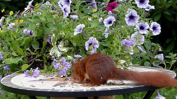 Animal  mammal  squirrel video