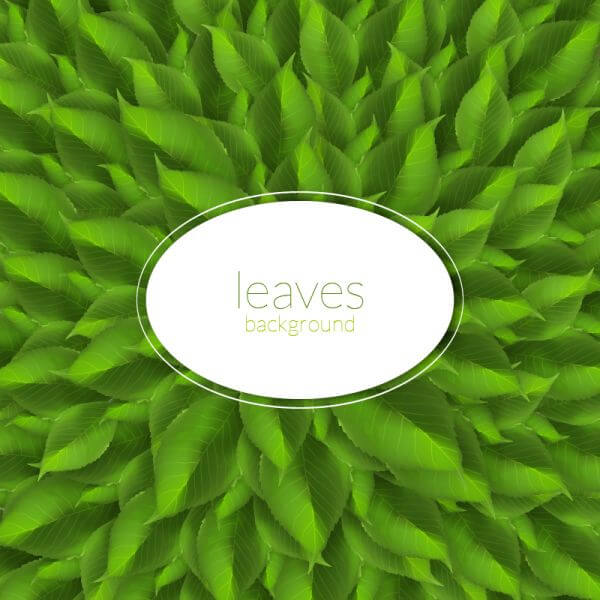 Green leaves texture with modern label vector