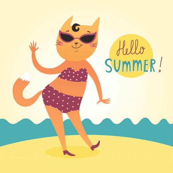 Hello Summer vector card with funny cat vector