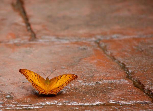 Little butterfly photo