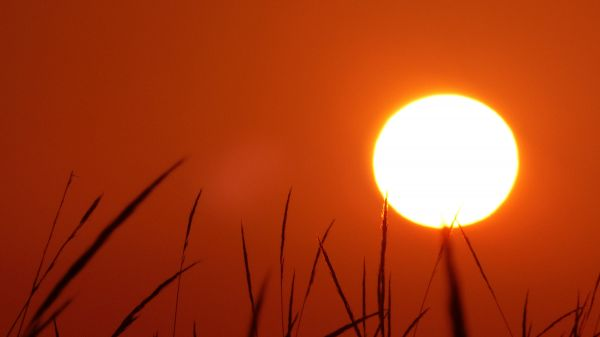 Summer Sun photo