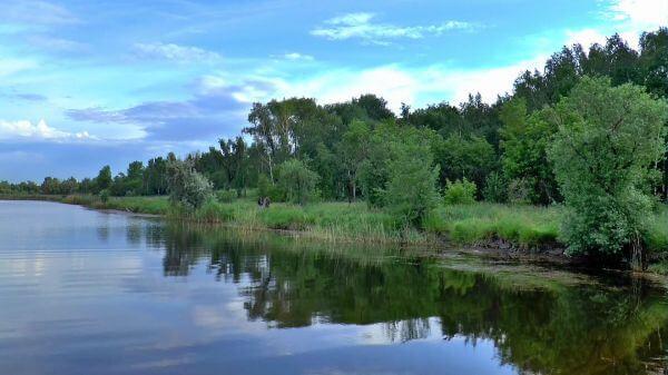 Nature  summer  siberia video