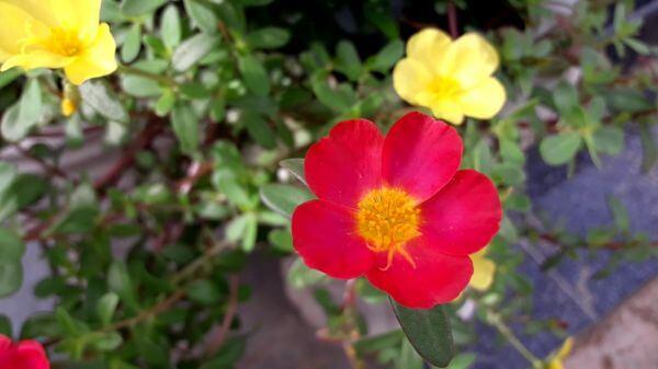 Flower  red  garden video