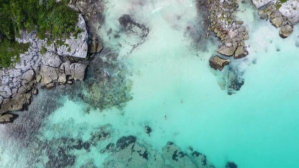 Swimming  sea  ocean video