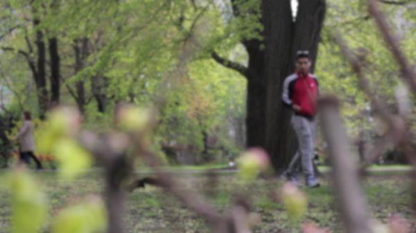 Squirrel  park  pedestrians video