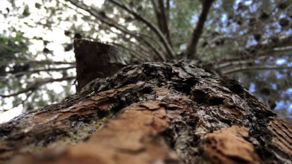 Tree  bark  tree bark video