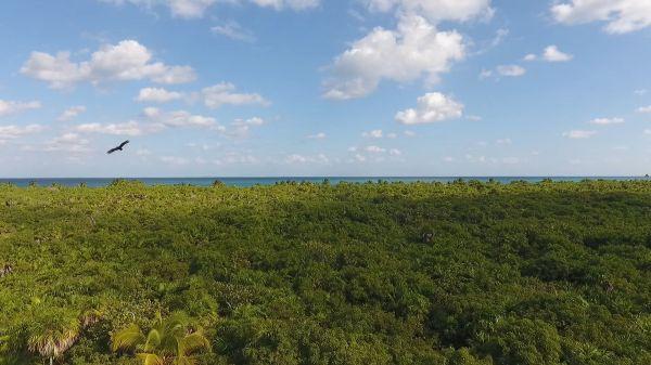 Shore  forest  beach video