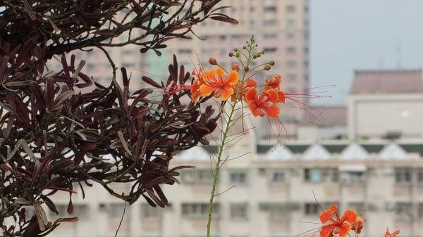 On the top floor  breeze  sky garden video