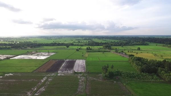 Country side  rice fields  nature video
