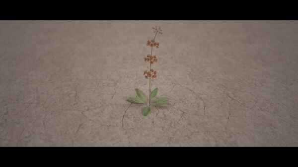 Flower  desert  karg video