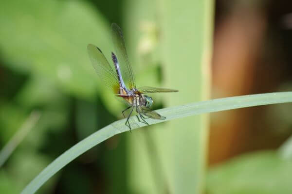 Dragonfly2 photo