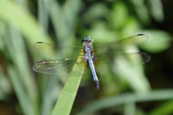 Dragonfly1 photo