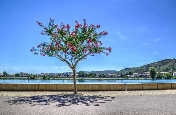 The boulevard tree photo