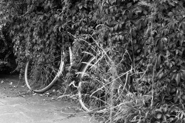 Lost bike photo