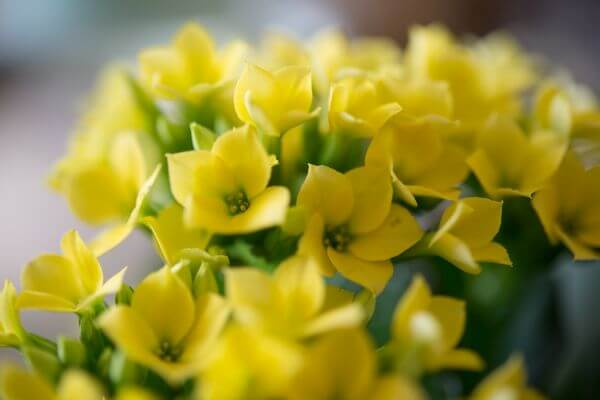 Bunch of yellow flowers photo