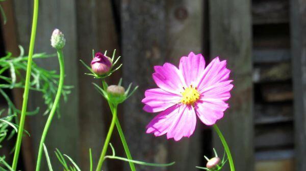 Flower  garden  closeup video