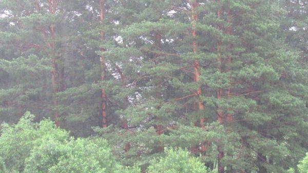 Rain  thunderstorm  forest video