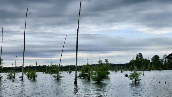 Lake  swamp  nature video