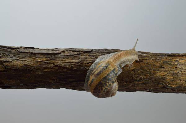 land snail photo