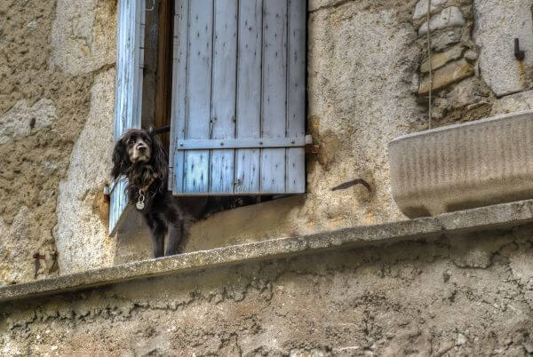 Dog waiting for the boss photo