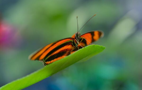 Butterfly on colorful background photo