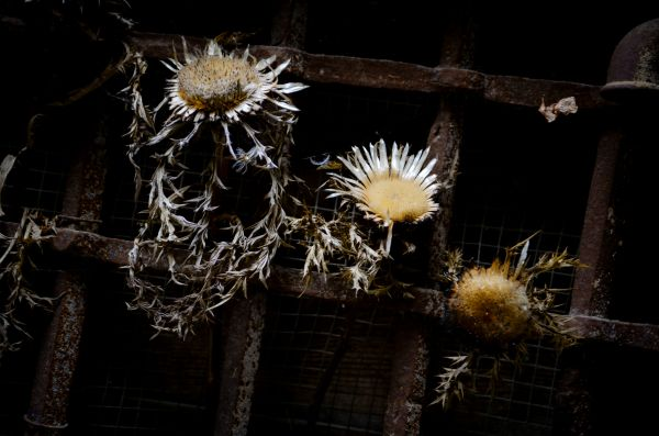 Dried flowers photo