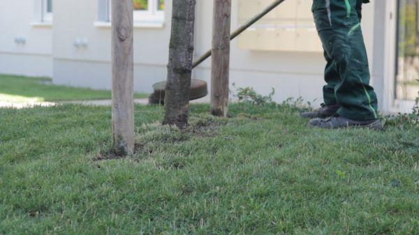 Garden  gardening  janitor video