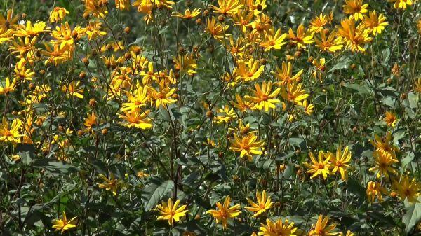 Flowers  summer  august video