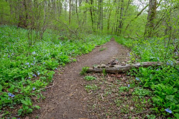 Forest Trail photo