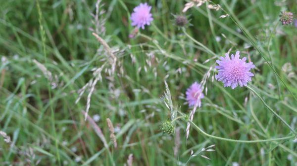 Flower  meadow  flower meadow video
