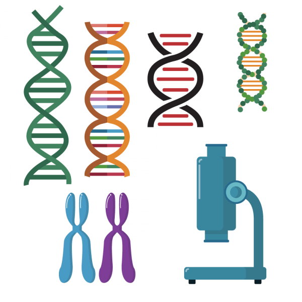 DNA double helix scientific vector set vector