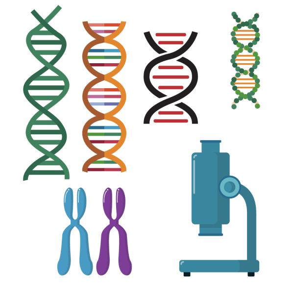 DNA double helix scientific vector set vector